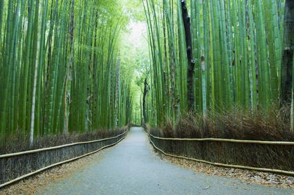 Kyoto Bamboo