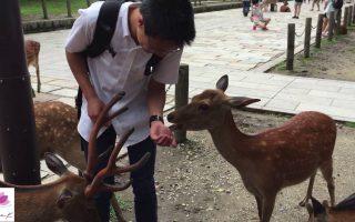 How to Feed the Deer at Nara