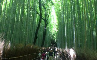 Bamboo Forest - Arashiyama, Japan