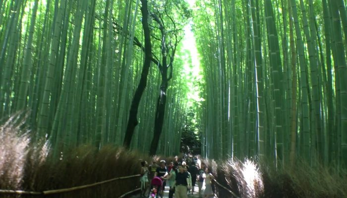 Bamboo Forest - Arashiyama, Japan
